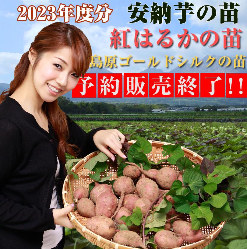 2017年安納芋の予約販売開始