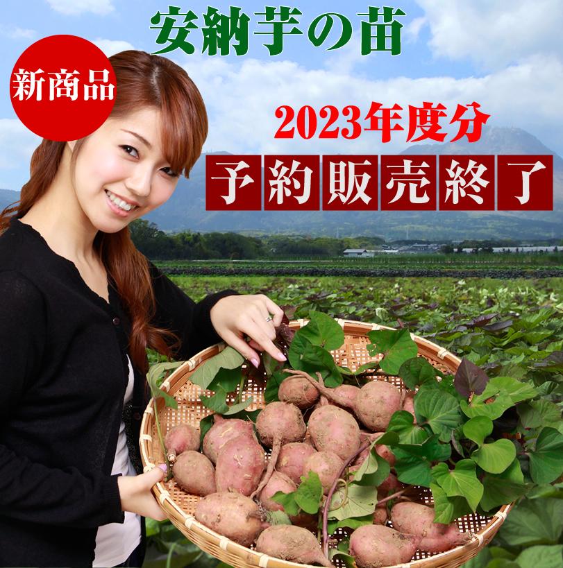 安納芋の苗の販売開始!6月下旬まで