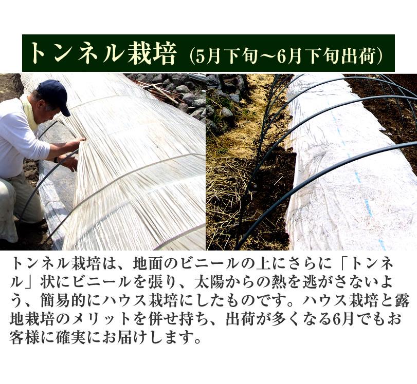 トンネル栽培で出荷が多い6月にも安定してお届けします。