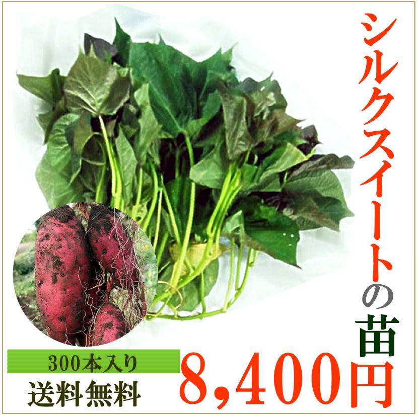 サツマイモの苗 30本