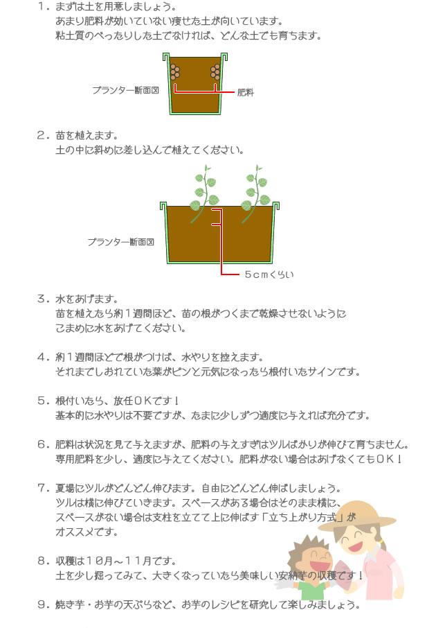 安納芋の育て方