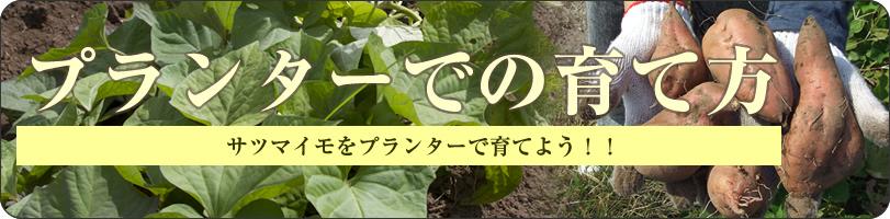 おいしい安納芋を自分達で育てよう!とっても簡単!お芋ガーデニング