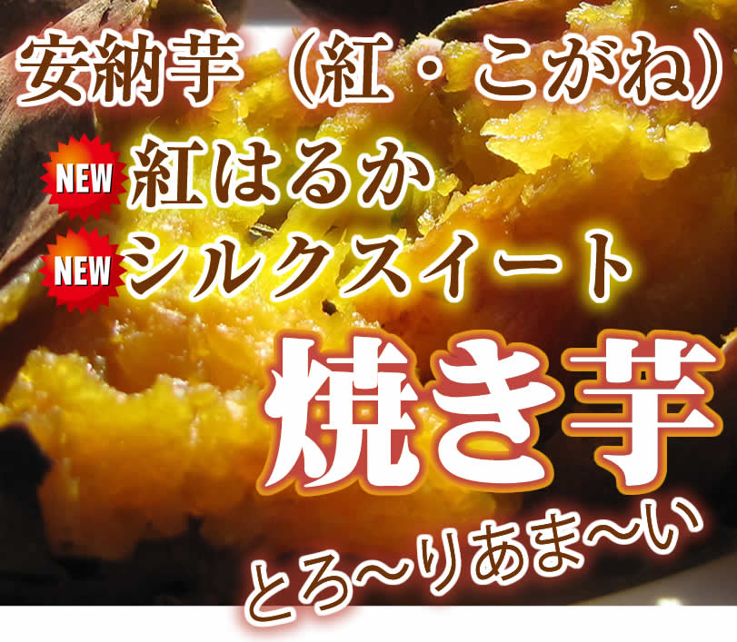 おいしい原種安納芋 焼き芋紅はるかシルクスイート