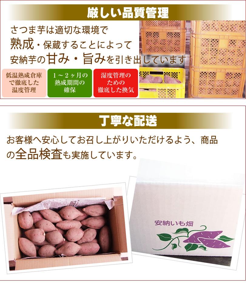 島原産生芋 紅はるかさつま芋